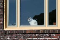 Do you often leave your pet cat alone at home? Here are the reasons why you should not. http://healthypets.mercola.com/sites/healthypets/archive/2014/01/06/home-alone-pet-cat.aspx