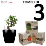 Combo of 3 Self watering #planters in just RS. 1799. For more great deals visit at Yuccabe Italia website