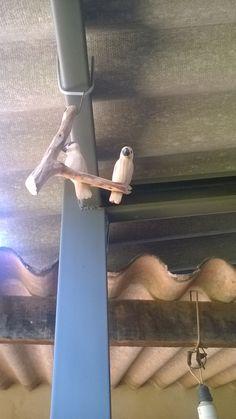 Pássaros de madeira