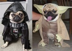 <3 Pugs (and Star Wars)!