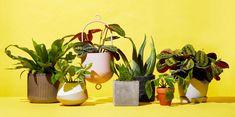 The Best Places to Buy Plants Online - Cheap Indoor Plants to Order Best Indoor Trees, Best Indoor Plants, Concrete Planters, Planter Pots, Ems, Buy Plants Online, Plant Delivery, Missouri Botanical Garden, Peace Lily