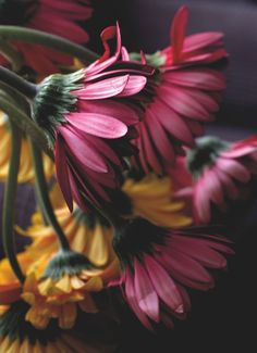 Bloom And Wild, Sunflowers And Daisies, Stockholm, Beautiful Flowers, Daisy, Plants, Blossoms, Projects, Inspiration