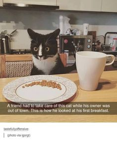 That was a dirty trick, Human - LOLcats is the best place to find and submit funny cat memes and other silly cat materials to share with the world. We find the funny cats that make you LOL so that you don't have to. Cute Funny Animals, Funny Animal Pictures, Funny Cute, Hilarious, Funny Pics, Funniest Animals, Super Funny, Funny Images, I Love Cats
