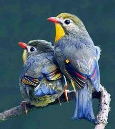 Rare Birds, Exotic Birds, Colorful Birds, Most Beautiful Birds, Pretty Birds, Bird Pictures, Little Birds, Nature Animals, Wild Birds