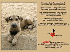 Jeder kann etwas tun, um das Leben eines Tieres zu retten. >> http://www.ich-liebe-tiere.com/ <<