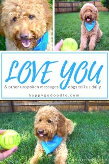 In less than a minute, this dog video will bring a smile to your day! Through a game of ball, a goldendoodle shares uplifting messages that reveal the unspoken bond between pets and the people who love them.