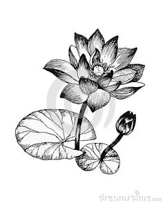 Black and White Illustration Fresh Water Lily Flowers Pond Black and White Illustration Lotus Tattoo Design, Lotus Flower Design, Flower Tattoo Designs, Shadow Drawing, Leaf Drawing, Pencil Sketch Drawing, Black And White Drawing, Black And White Illustration, Lilly Flower Tattoo