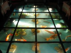 1000 images about fish on pinterest fish tanks for Floor fish tank