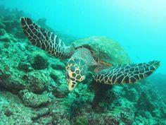 いちまい詳細|沖縄の奥、島の奥。おくなわ 離島ガイド・プロジェクト