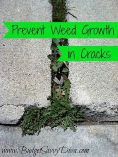 Prevent Grass and Weeds From Growing in Cracks -- pour salt water on them. Easy and cheap!