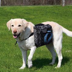 Selkäreppu koiralle