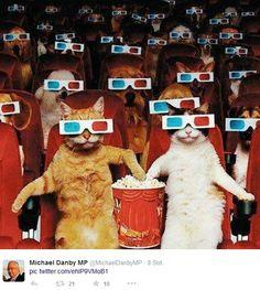 Auch Katzen gehen gerne ins Kino.