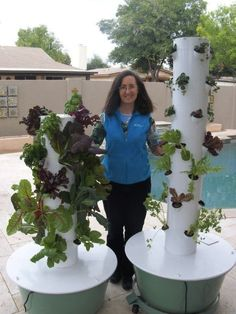The Tower Garden on your left is over 4 weeks, to your right is over 2 weeks old. Its so easy, and quick to grow!