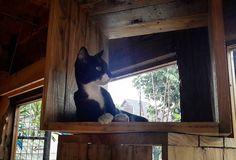 #furnichers #hangerboy #hangeroftheday #catslovers #catslovercatsoftheday #catsofinstagram #catstagram #instacat #catsdiary #diarykucing