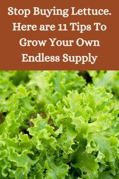 Growing Gardens, Growing Plants, Diy Backyard Fence, Patio, Container Gardening, Gardening Tips, Insect Eggs, Veggie Cakes, Lettuce Seeds