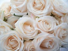 champagne roses...beautiful colour