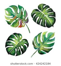 """tropical Split Leaves plant botany watercolour object leaf painting on white background illustration Hand-painted watercolor plant background Leaf… """"Do not know what to do with your life?""""Gold leaf painting map of the world gole leaf world… Watercolor Plants, Watercolor Leaves, Watercolor Paintings, Leaf Paintings, Watercolor Design, Leaf Drawing, Plant Drawing, Drawing Drawing, Plant Painting"""