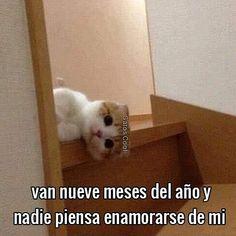 """111 Me gusta, 0 comentarios - Gatos Cool (@gatoscooloficial) en Instagram: """"O qué 😾? . . . #gatoscool😸 #memesdegatoscool #gatos_cool #enamorarse"""""""