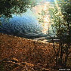 Walden Pond #walden #waldenpond #henrydavidthoreau #Thoreau #nature #pond #sunshine #massachusetts