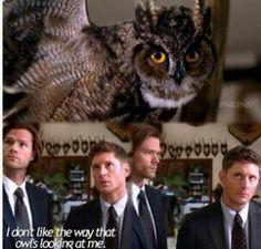 #Supernatural - Season 9, Ep. 5 - #DogDeanAfternoon