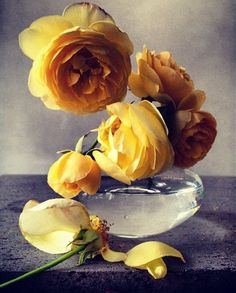 Yellow roses by Nick Knight