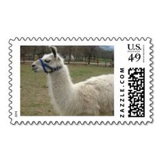 ==> consumer reviews          Llama Stamps           Llama Stamps In our offer link above you will seeReview          Llama Stamps lowest price Fast Shipping and save your money Now!!...Cleck Hot Deals >>> http://www.zazzle.com/llama_stamps-172442295121442869?rf=238627982471231924&zbar=1&tc=terrest