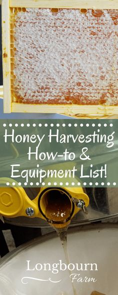an informative and handy list of honey harvesting equipment as well as a how-to guide, perfect for the first time bee-keeper!Get an informative and handy list of honey harvesting equipment as well as a how-to guide, perfect for the first time bee-keeper! Raising Bees, Raising Chickens, Backyard Beekeeping, Chickens Backyard, Honey Bee Farming, Harvesting Honey, Honey Extractor, Beekeeping For Beginners, Beekeeping Equipment