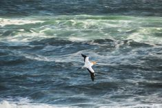 A collection of photos from a windy day watching the Muriwai Gannet colony. Country Lifestyle, Windy Day, Photo Diary, Day Hike, Winter Travel, Still Image, Auckland, Weekend Getaways, New Zealand