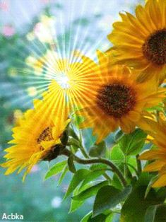 Good Morning Gift, Morning Songs, Good Morning Flowers, Good Morning Quotes, Sunflower Quotes, Sunflower Pictures, Dank Gifs, Coeur Gif, Sunflowers And Daisies