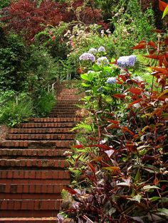 Lush greenery on the Greenwich Steps on Telegraph Hill.  I go up these steps about twice a week.