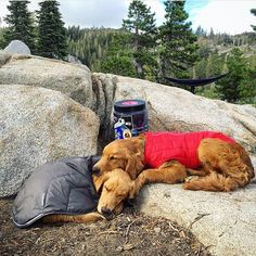 Don't worry about a thing. Every little thing gonna be alright. @thegoldenaspen #campingwithdogs