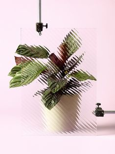 What a great still life editorial, utilizing only simple props, plants and colorful background, photographer & prop-stylist… Object Photography, Still Life Photography, Amazing Photography, Nature Photography, Product Photography, Photography Ideas, Composition Photo, Instalation Art, Plant Background