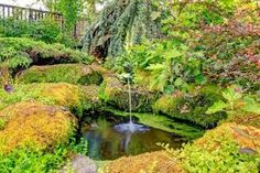 Natural pond inspiration