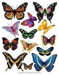 Resultado de imagen para mariposas pintadas hermosas