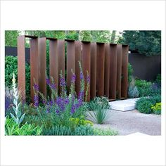 GAP Photos - Garden Plant Picture Library - Verbascum phoenicum Violetta in front of Corten steel screens. The Daily Telegraph Garden, Best in Show, Gold medal winner, Chelsea Flower Show 2010 - GAP Photos - Specialising in horticultural photography