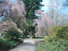 VanDusen Botanical Gardens @VanDusenGdn