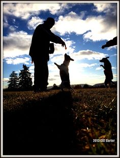 Walking the Dogs by Christy Carter · 365 Project