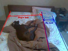 True, that's why the dogs can not sleep in the bed with us!