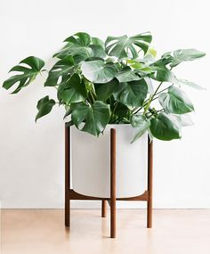 Shop for the perfect Case Study® Ceramics for your new Spring plants at modernica.net, available in different shapes, sizes and colors.  #casestudyceramics #modernica #planter #plants #indoor #outdoor #plantlife #green #homedecor #shop #modern #ceramic #midcenturymodern #design