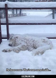 He Loves Snow. He Won't Even Come Inside...#funny #lol #lolzonline