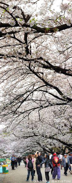 Ueno Park, Tokyo_ Japan