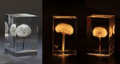 REAL Dandelions Turned Into Gorgeous OLED Lights by Takao Inoue | Bored Panda