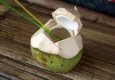 Voici 50 propriétés médicinales de l'eau de noix de coco jeune et tendre : C'est un petit miracle de l'alimentation vivante. Très basse en carbo-hydrates, basse en gras, 99% libre de gras. Basse en sucre qui est naturel. Elle maintient le corps frais et à la bonne température. Elle contient des composés organiques dont les propriétés …