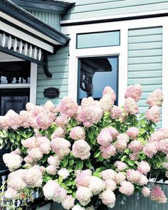 "126 Likes, 3 Comments - G e o r g i a • F o s s (@gracedbytheworld) on Instagram: ""Gorgeous blooms in Steilacoom, WA 🌸"""