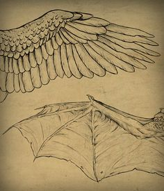 Taking Flight: A Beginner's Guide Into Drawing Wings - Tuts+ Design & Illustration Article <<< FUCKING ANGEL AND DEMON WINGSS