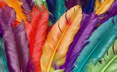 nice feather colorful hd wallpaper