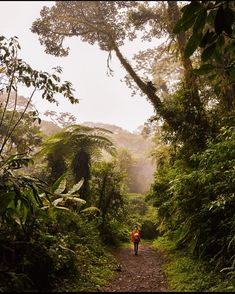 "DID YOU KNOW? Almost one-third of Costa Rica's territory is protected nature reserve. The Monteverde Cloud Forest Reserve (Reserva Biológica Bosque Nuboso Monteverde) is one of them. Here you'll find about 10.500 hectares of cloud forest with rich flora and fauna and 90 % are virgin forest In the 1950s Quaker families from Alabama came to this area in order to avoid the Korean War draft and gave it the name ""Monte Verde"" - Green Mountain In the 1960s Biologists began to acknowledge… Monteverde, Costa Rica Travel, Green Mountain, Korean War, Flora And Fauna, Nature Reserve, Vacation Trips, Alabama, Did You Know"