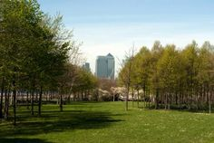The skyscrapers of London's Canary Wharf viewed from the Greenwich Peninsula