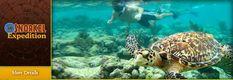 Riviera Adventours, Activities & Tours in Playa del Carmen, Tulum, Riviera Maya