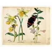 LE MOYNE DE MORGUES Jacques A Sheet Of Studies Of Flowers: A Gilliflower, Two Wild Daffodils, A Lesser Periwinkle And A Red Admiral Butterfly